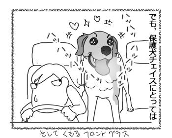 羊の国のラブラドール絵日記シニア!!「チェイスとドライブ」2