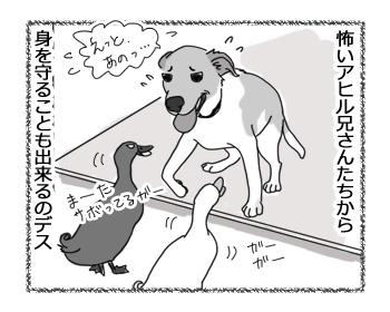 羊の国のラブラドール絵日記シニア!!「犬とアヒル」4