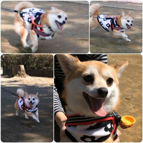 PhotoFancie_2015_04_23_10_27_36.jpg