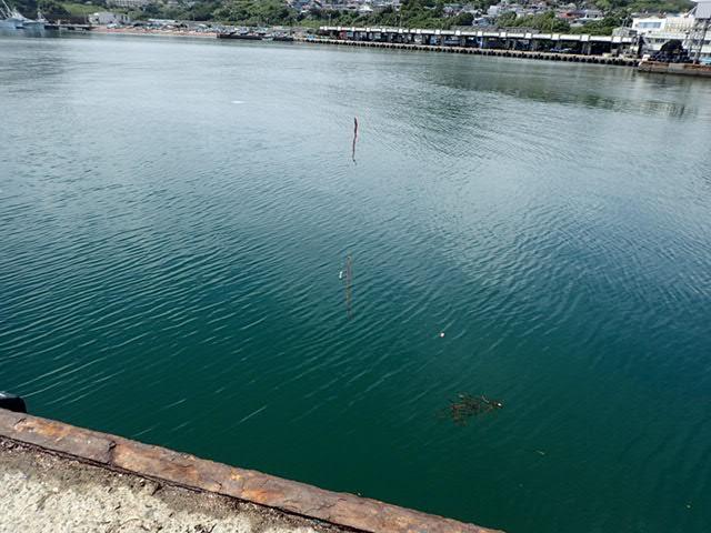 鴨川港で釣り (2)