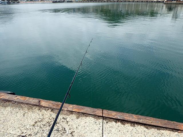 鴨川港で釣り (3)