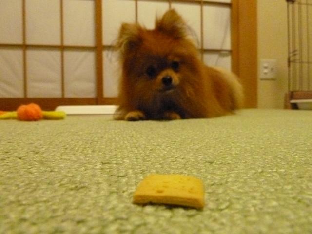 150523ポン太クッキー②