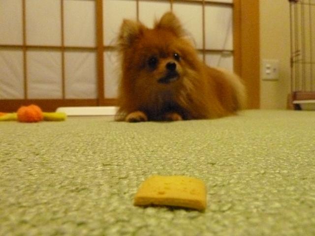 150523ポン太クッキー③