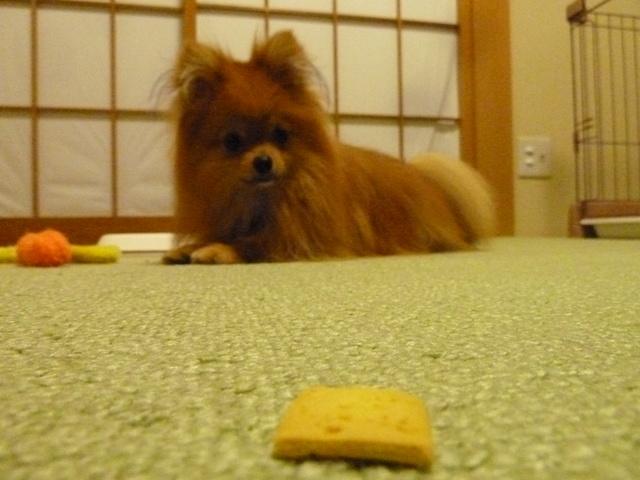 150523ポン太クッキー④