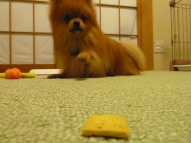 150523ポン太クッキー⑤