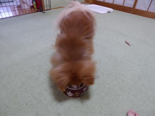 150723ポン太朝食⑤