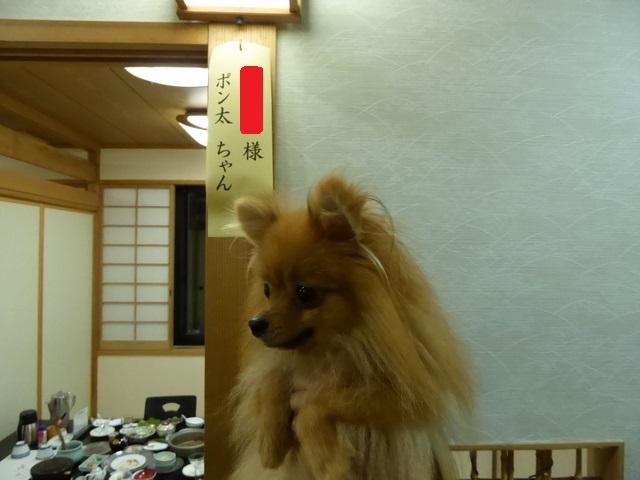 150803ポン太夕食⑧