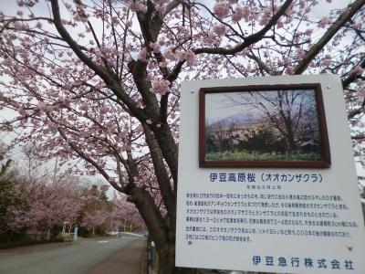 伊豆旅行20150305