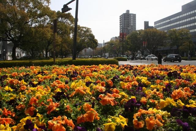 IMG_6509 平和大通りの花壇(640x427)