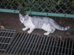 うま猫 011