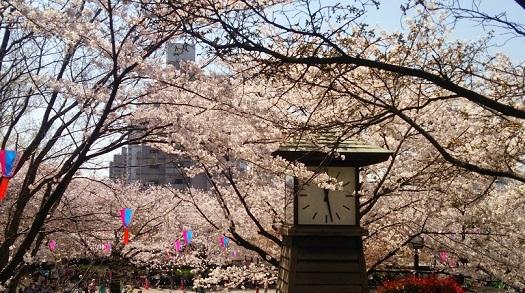 お花見 飛鳥山公園+