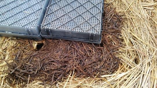 ネズミの穴2+