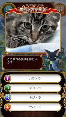 このネコの模様を何という?
