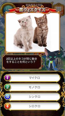 2匹以上のネコが同じ動きをすることを何という?