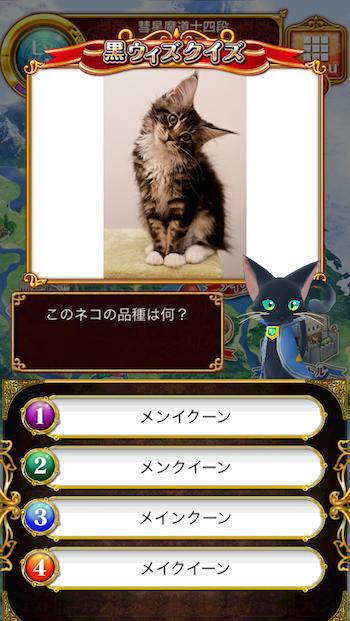 このネコの品種は何?