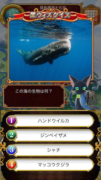 この海の生物は何?