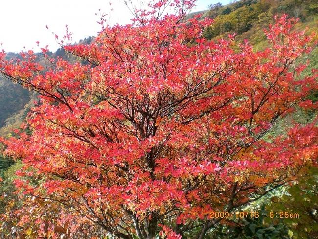 s-笹ヶ峰・チチ山ピクチャ 015_01