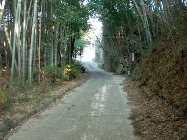 s-鉢伏山ピクチャ 003_01