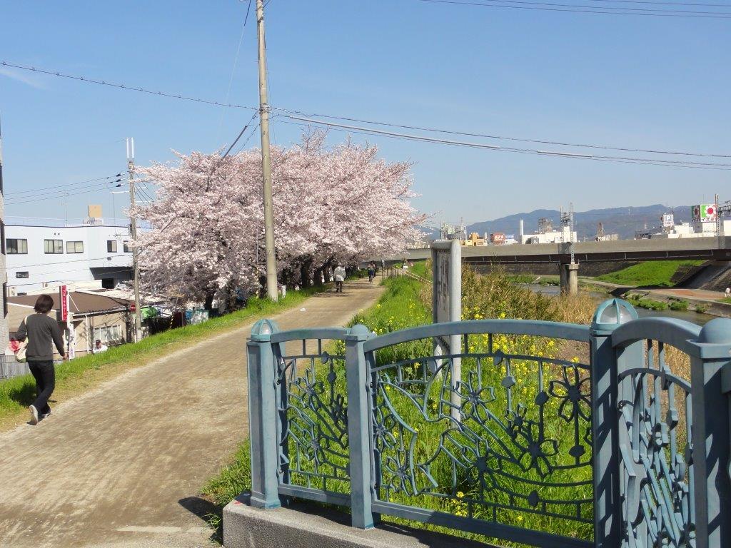 50%桜と橋DSC00012