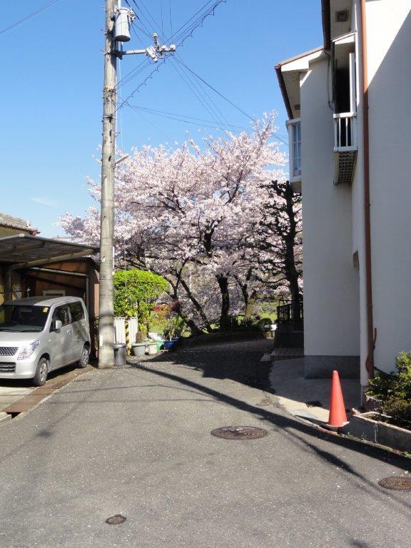 50桜DSC00002