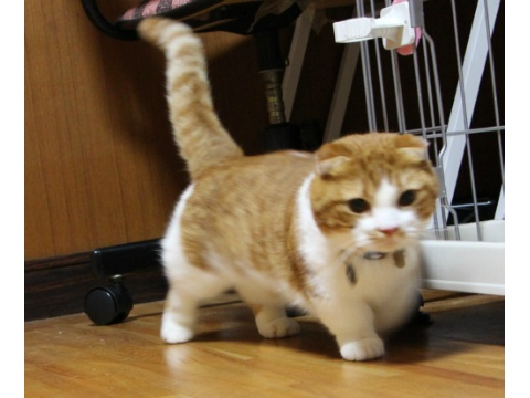 cat1232.jpg
