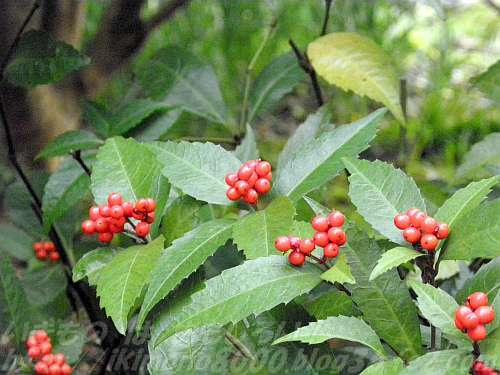 花の少ない冬の赤い実は目を楽しませてくれます(花の文化園)