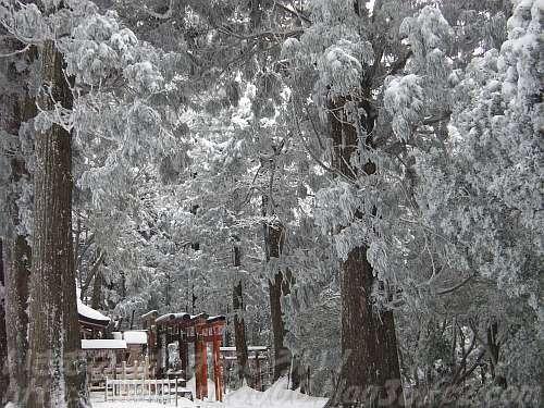 霧氷の杉に覆われた弁天嶽山頂の嶽弁天社