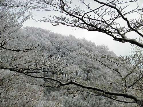 向かいの文殊尾根のブナ林も樹氷ポイント