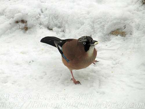 趾を見ればわかるように木の上の鳥