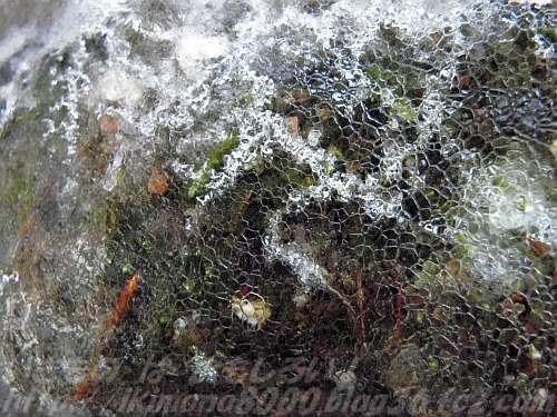 氷に閉じ込められたコケと謎の白い筋