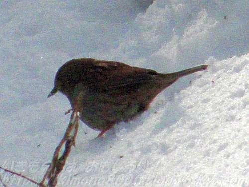 高野山への道で出会った小鳥
