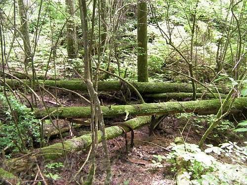 高野山の森のなかで朽ちていく木