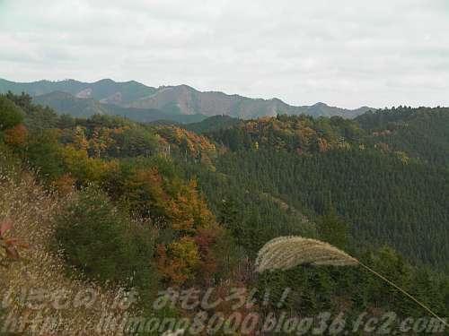 高野山の木々はどれだけ二酸化炭素を蓄えているのでしょうか