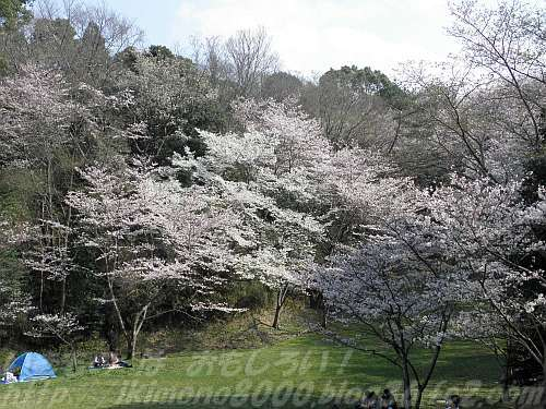 桜木の里の東