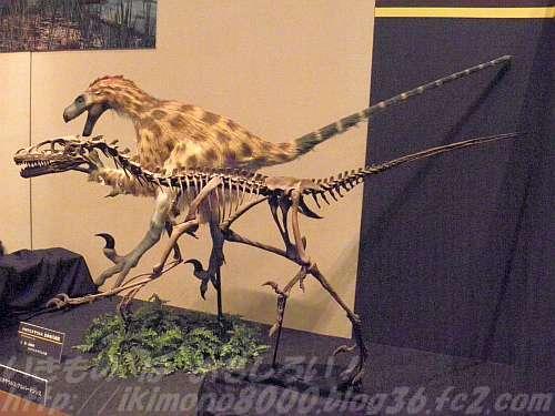 ドロマエオサウルスの骨格と生体の復元もあります