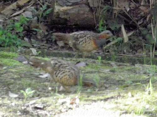 錦織公園で出会った2羽の鳥