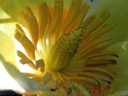 花の中を見られうのは珍しいかも