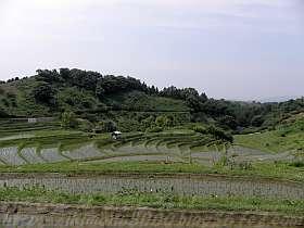 6月の下赤阪の棚田