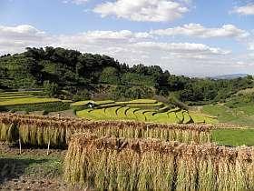 10月の下赤阪の棚田