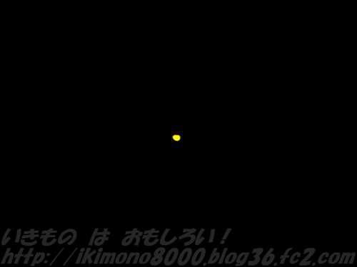 ゲンジボタルよりも少し黄色っぽいヒメボタルの光