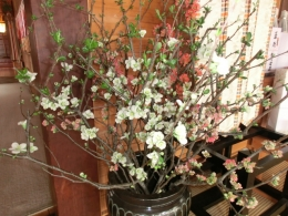 H27木瓜の花
