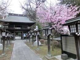 h27雪桜