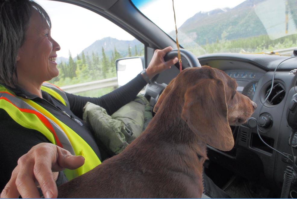犬と一緒に仕事220150609