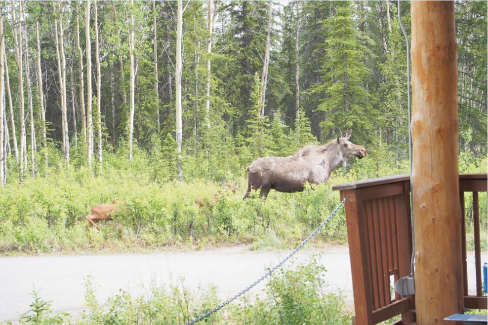 ムース20150609
