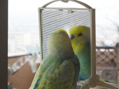 鏡に映る自分の姿に・・・