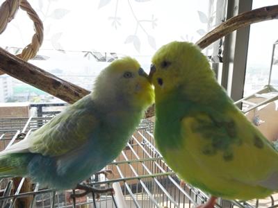 朝からおかしな2羽さん