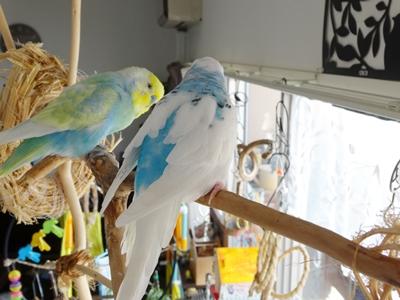 アート鳥小屋