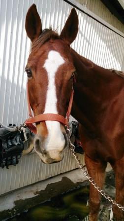 ムービー やればできる馬