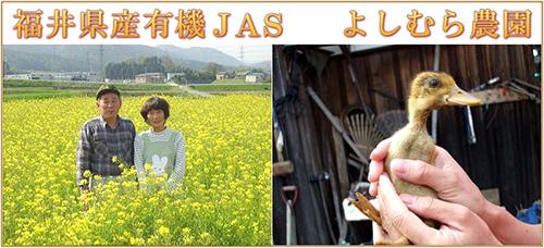 よしむら農園・福井県産コシヒカリ応募2