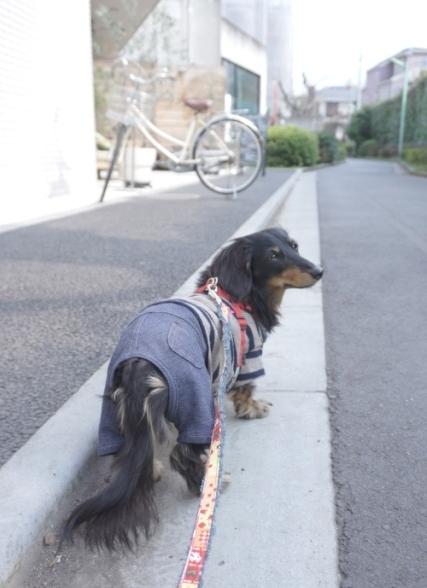 最後の犬塾 (3)